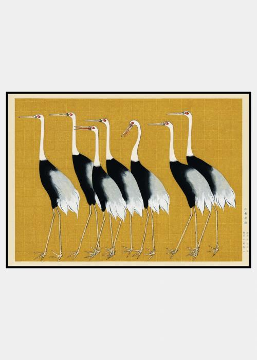 Flock of Red Crown Cranes - plakat i ramme